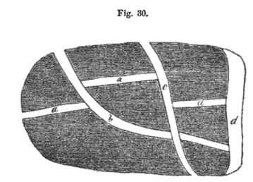 multiple-fissures